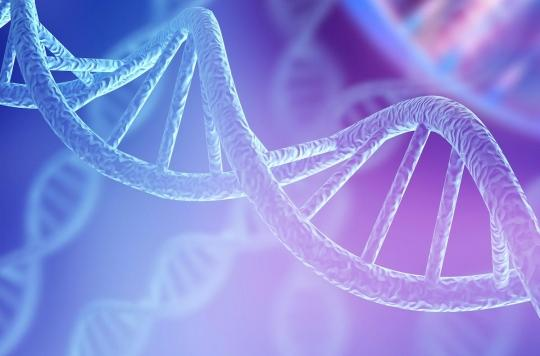 Les structures ADN à quatre hélices sont fréquentes dans le cancer du sein