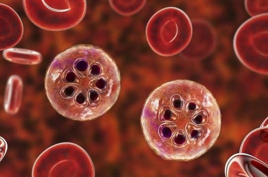 La souche de paludisme la plus meurtrière se protège du système immunitaire