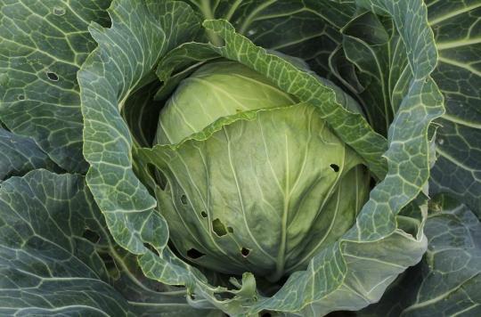Nutrition : pourquoi les insectes renforcent les bienfaits des légumes et fruits bio