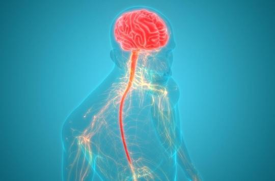 Comment le stress finit par affecter tout l'organisme