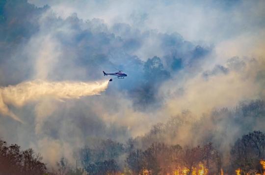 La fumée des feux de forêt participe à la propagation de maladies infectieuses
