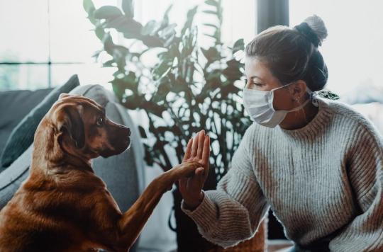 Animaux domestiques : la maladie des chiens anglais était ... un coronavirus