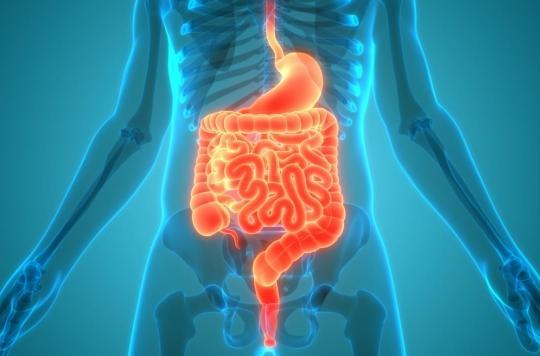 Insuffisance respiratoire : peut-on respirer par nos intestins ?