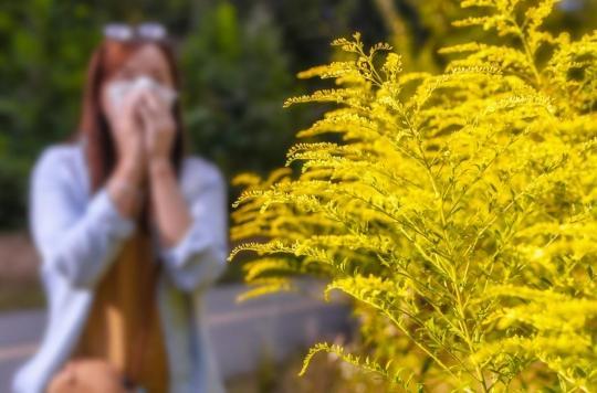 Allergie : deux associations dénoncent l'échec de la lutte contre l'ambroisie