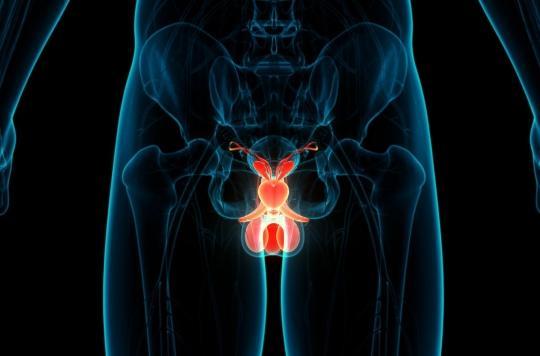 Cerveau et testicules : des points communs inattendus