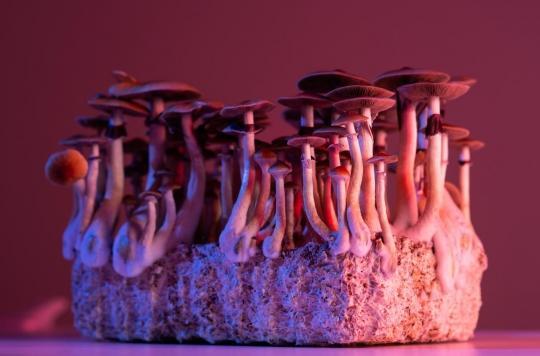 Bipolaire, il s'injecte une infusion aux champignons hallucinogènes ... qui ont continué à pousser dans son sang !