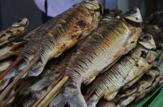 Comment le déclin de la biodiversité chez les poissons peut affecter la santé humaine