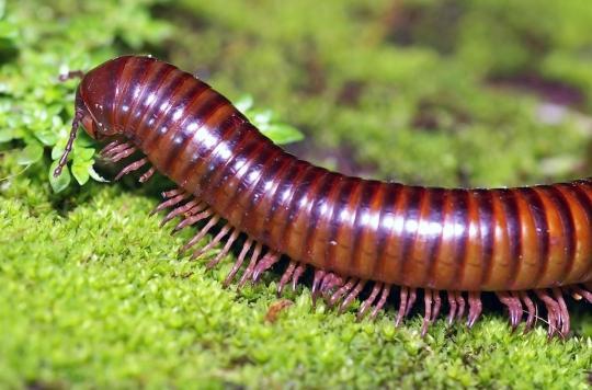 Un homme meurt après s'être filmé en train de manger des mille-pattes et autres insectes vivants
