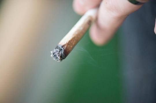 THC : le cannabis fortement concentré serait responsable de nouveaux cas de troubles mentaux