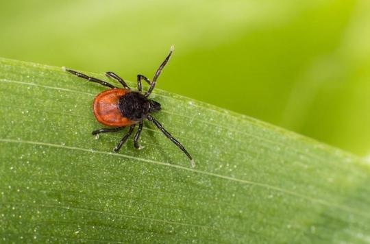 Maladie de Lyme : une tiquothèque pour mieux la connaître et mieux la traiter