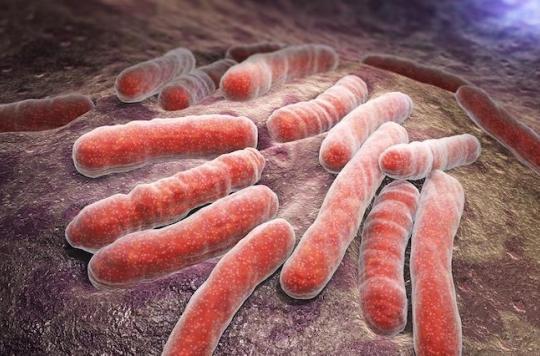 Superbactéries : plus de 30 000 morts en Europe à cause de politiques de santé « court-termistes »