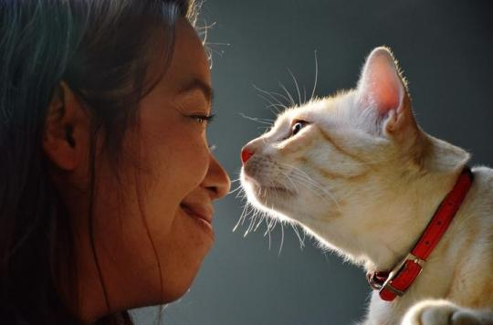 Les néonicotinoïdes toujours autorisés dans les anti-puces pour chiens et chats