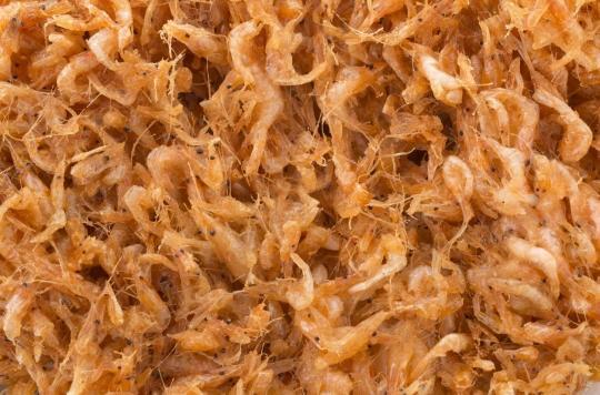 Bilharziose : comment l'élevage des crevettes d'eau douce pourrait venir à bout de la maladie
