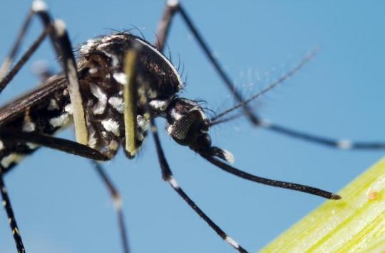Dengue, chikungunya, Zika : le moustique Tigre est aussi présent en Ile-de-France et dans le Grand-Est