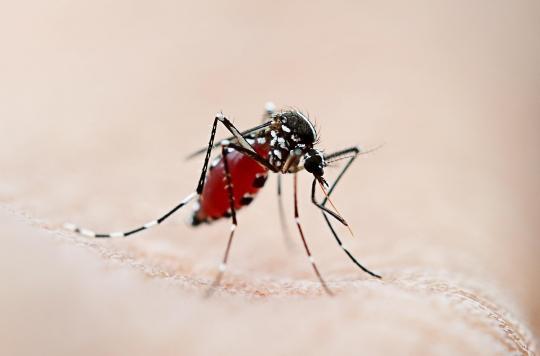 Des chercheurs cartographient la propagation potentielle du virus de la fièvre jaune dans le monde