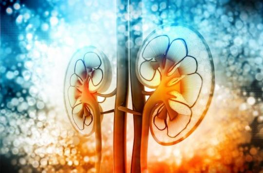 Le rein est un organe discret mais indispensable à la vie. Rôle, Maladies, transplantation…