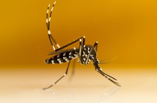 Moustique tigre : comment le reconnaître et s'en protéger ?