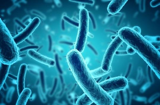 On sait maintenant comment certaines bactéries deviennent \