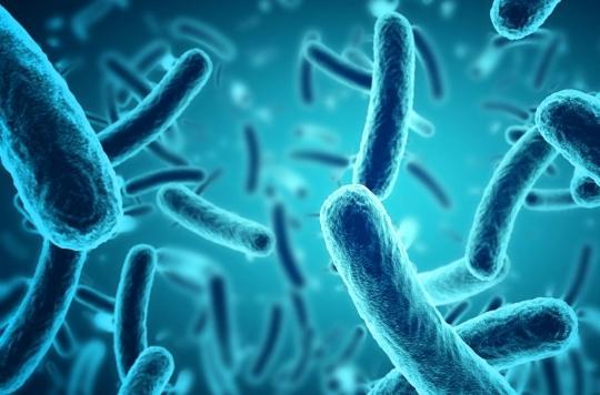 L'arme secrète des bactéries révélée