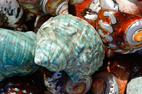 Alzheimer : comment des chercheurs sont-ils parvenus à transférer la mémoire d'un escargot de mer à un autre ?