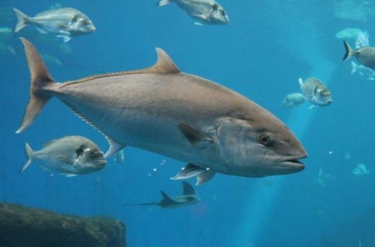 Réchauffement climatique : le poisson pourrait devenir de plus en plus toxique pour l'Homme