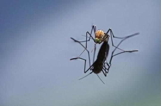 Paludisme : Bill Gates investit 4 millions de dollars pour éradiquer les moustiques