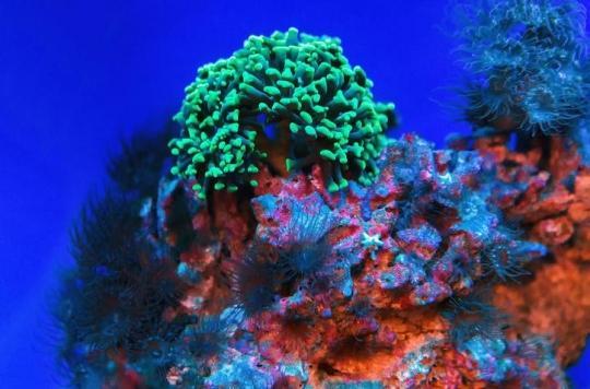 Une « super molécule » anti-cancer élaborée grâce à une éponge marine