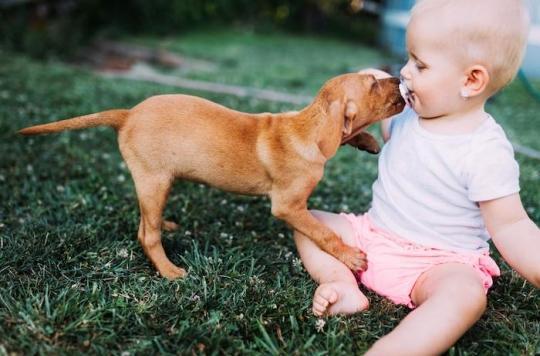 BactérieC. canimorsus : de nombreux chiens et chats en bonne santé peuvent vous infecter