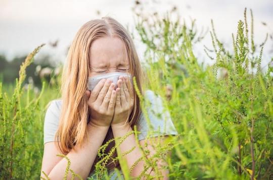 Ambroisie : les allergies ont commencé, premier pic prévu début août