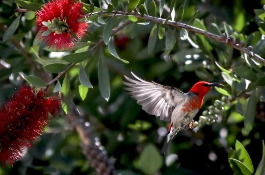 Comment la biodiversité améliore notre santé mentale