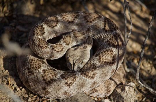 Morsures De Serpent L Oms Lance Un Plan Pour Reduire De Moitie Les Deces D Ici
