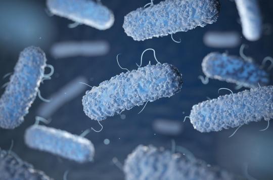 Deux composés antibactériens efficaces contre la tuberculose