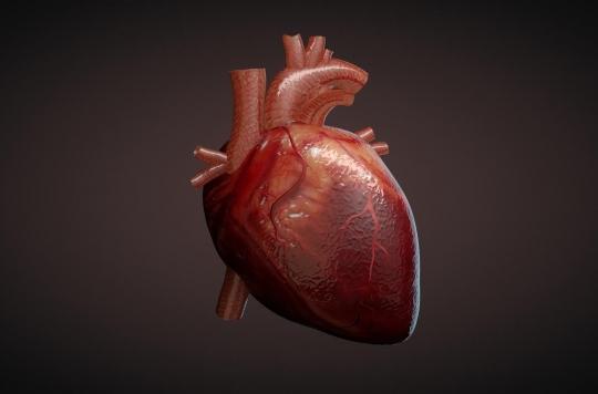 Le microbiote intestinal joue sur les maladies du cœur