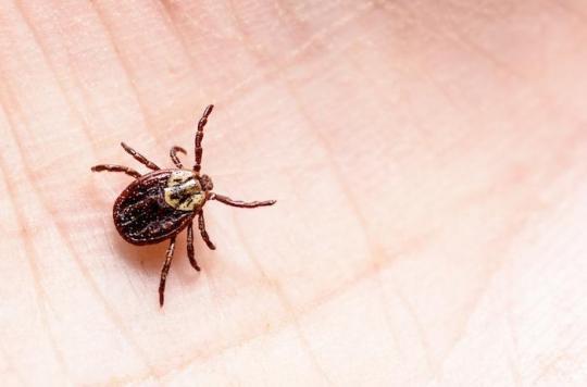 Maladie de Lyme: l'Académie de médecine désapprouve les recommandations de la Haute Autorité de santé