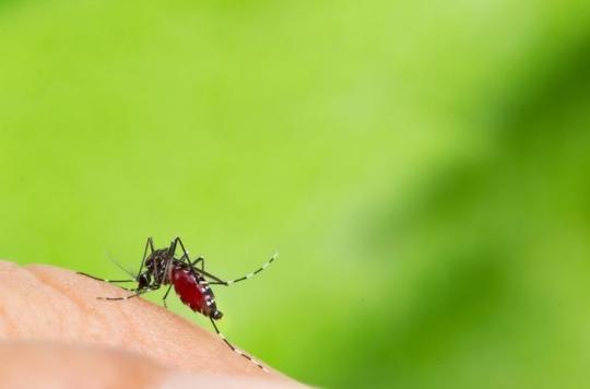 Les moustiques tigres colonisent les Hauts-de-Seine et le Val-de-Marne : comment s'en protéger ?