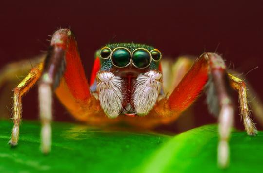 Phobies : les maîtriser grâce aux images subliminales