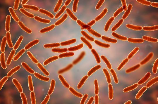 Les bactéries intestinales aident à guérir les lésions hépatiques chroniques causées par l'alcool