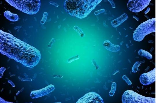 180 morts en Afrique du Sud : découverte de l'origine de la pire épidémie de listériose