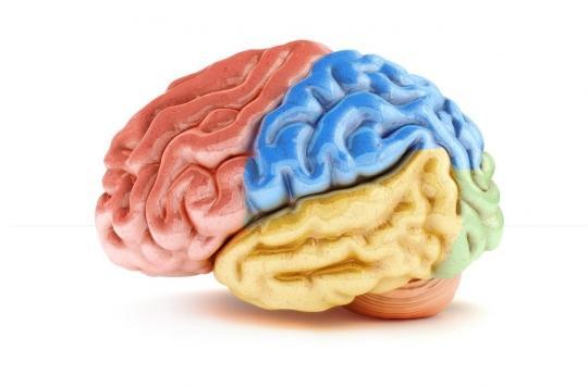 Où le cerveau humain sauve-t-il nos émotions ?