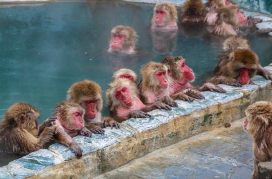 Ce que les macaques nous apprennent sur le SARS-CoV-2