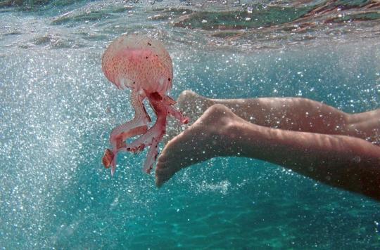 Méduses, poissons venimeux : les mauvaises rencontres de la baignade