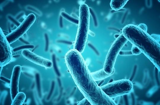 Des bactéries sont capables de communiquer pour résister contre les antibiotiques