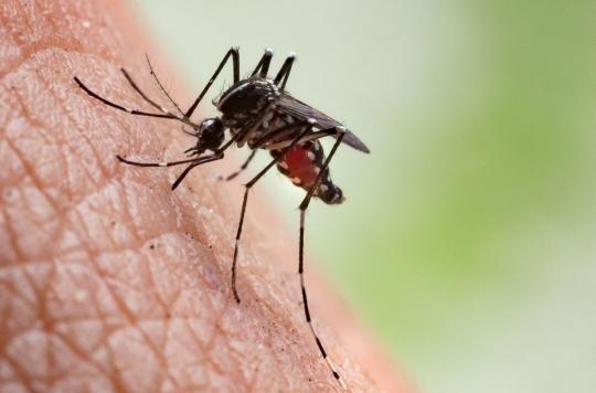 Un médicament pourrait bientôt rendre notre sang mortel pour les moustiques