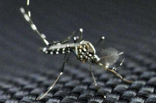 Zika : épidémie confirmée en Martinique