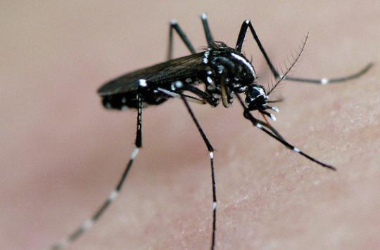 Zika : le virus prolifère davantage dans le vagin