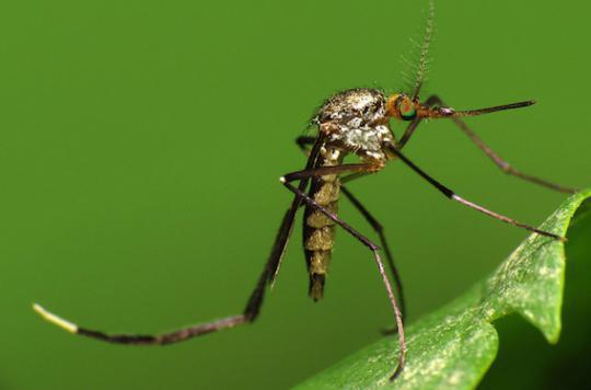 Zika : les variations du virus ont permis sa propagation