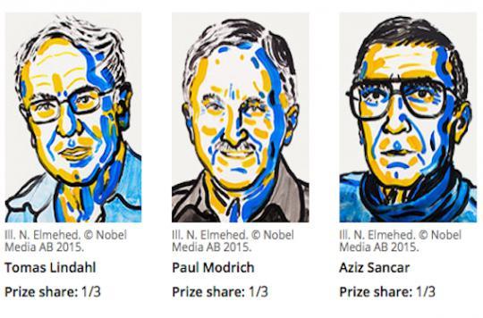 Prix Nobel de chimie : les mécanismes de réparation de l'ADN primés