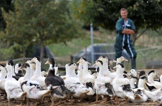 Grippe aviaire : les éleveurs signent un pacte de biosécurité
