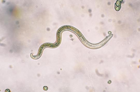 les parasites aquatiques)