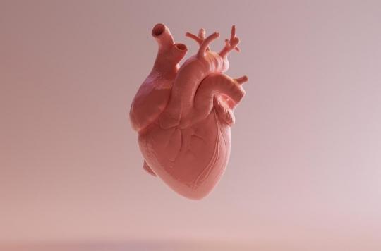Comment se créent les battements du cœur ?